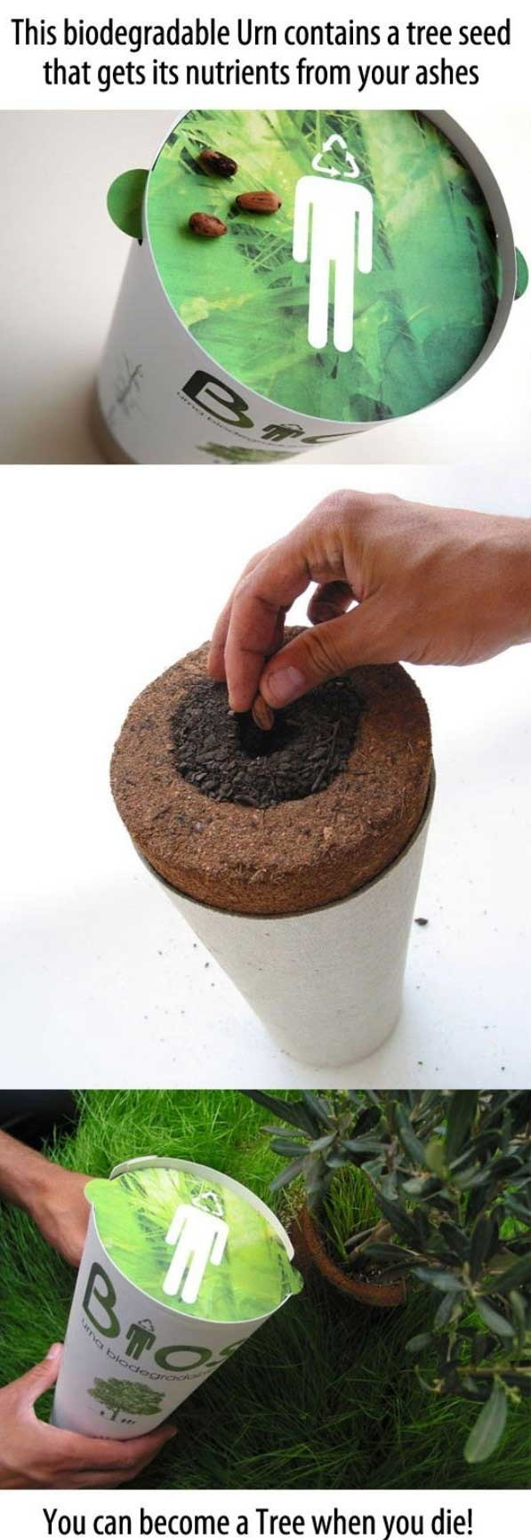 The Biodegradable Urn.....I'm in!