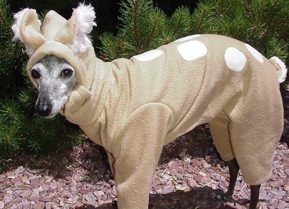 Deer Dog Costume Dog Costumes Pinterest Dog And