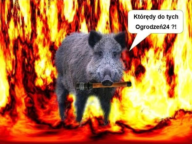 Kup siatkę leśną - zdenerwuj Dzika Furiata !!!   #ogrodzenia #siatka #leśna #autostradowa #siatkaleśna #siatex #zamość #ogrodzenia24