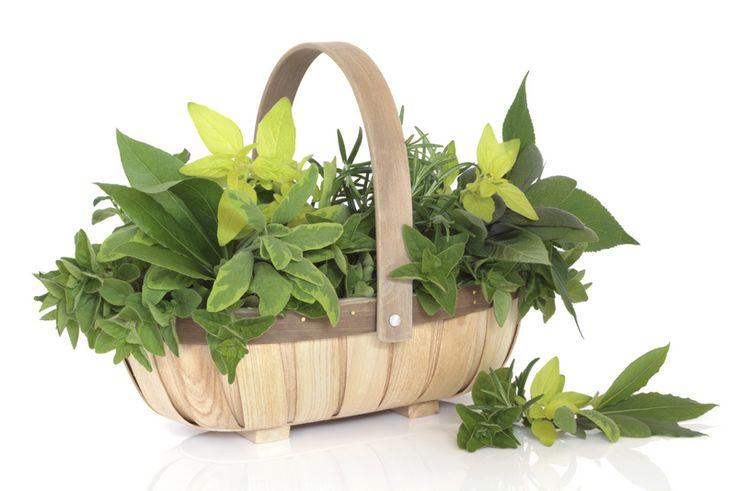 Conheça as Ervas aromáticas  - Visite-nos em: www.teleculinaria... | Descubra receitas deliciosas, truques, dicas, cursos, o Blog Culinária A-Z e muito mais!