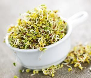 ростки люцерны - полезная и вкусная добавка к пище