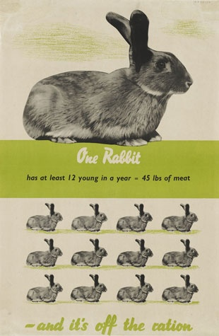 Oh my! One rabbit can provide me with 45 lbs of meat AND it's all off the ration? (Another curious find during my modern kitchen work research.)