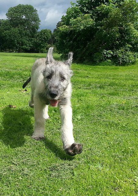 Explore amadeushound's photos on Flickr. amadeushound has uploaded 63 photos to Flickr.