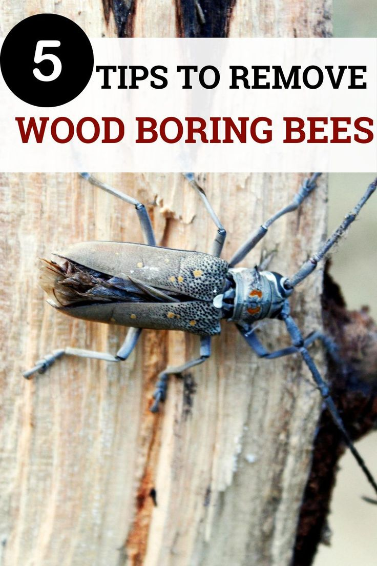 How to get rid of wood boring beeseasy explanation 5