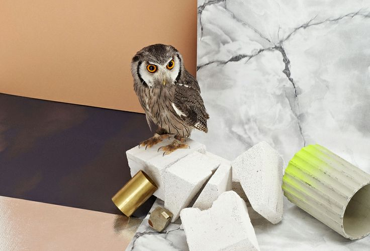 wild birds, barn owls, hawks and kites by mousse contemporary art magazine @ miart 2014