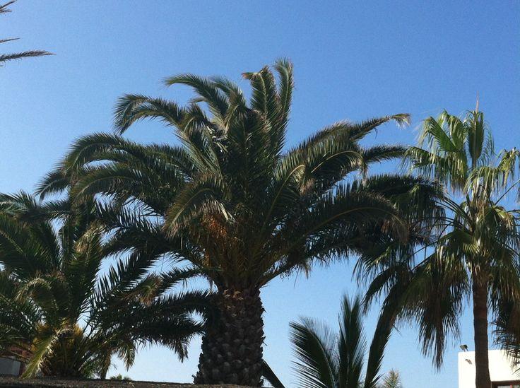 Fuerteventura helmikuu 2014<3