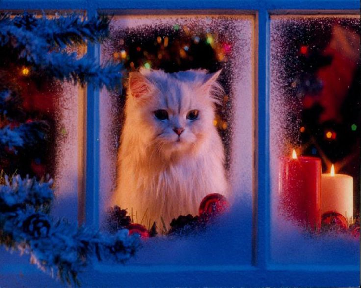Afbeeldingsresultaat voor enjoy christmas with your dogs, cats outside pictures