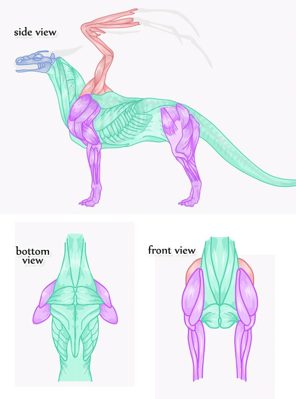how-to-draw-an-anatomically-correct-dragon-7