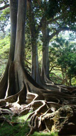 65 Best Ntbg Gardens Tropical Fascination Paradise