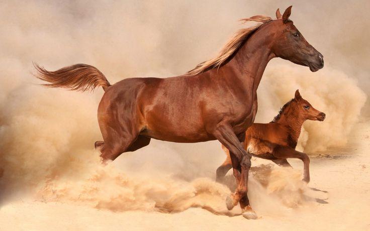 Скачать обои обои от lolita777, лошадь, жеребенок, песок, раздел животные в разрешении 1680x1050
