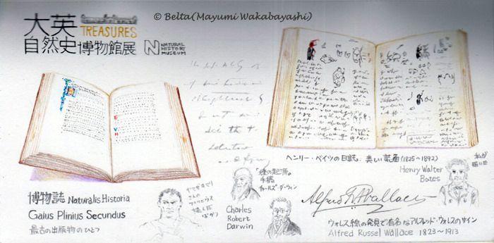 https://flic.kr/p/U6gXwv | 2017_04_16_daiei_03_s | 国立科学博物館の「大英自然史博物館展」 文字に注目。  © Belta(Mayumi Wakabayashi)