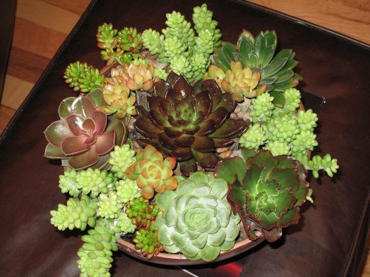 Best 25 dish garden ideas on pinterest diy terrarium for Succulent dish garden designs