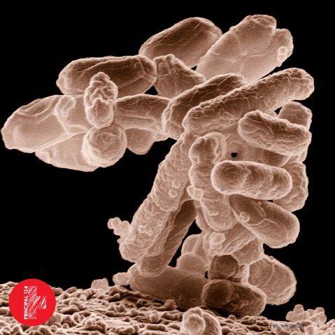 analítica de flora bacteriana