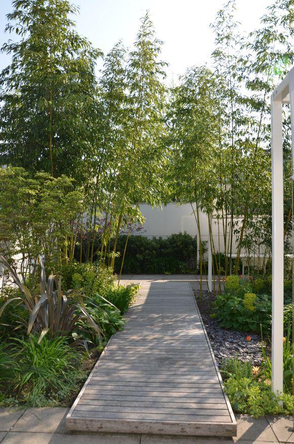 Hoge bamboe met een strakke vlonder