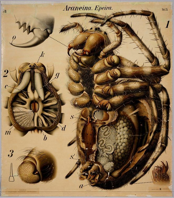 vintage illustrations insects | Vintage Insect Anatomy | Cakehead Loves Evil