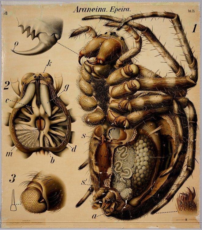 Insectos / Dibujos de la colección de la universidad de Wageningen