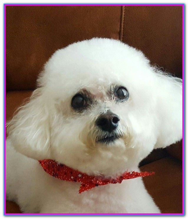 A Plus Dog Grooming Louisville Ky I Arrived As The Groomer Was