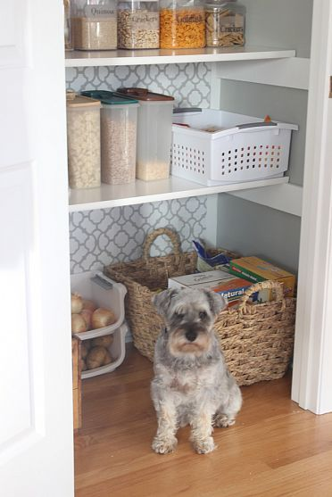 Pantry with gray paint  wallpaper, white shelves and trim.