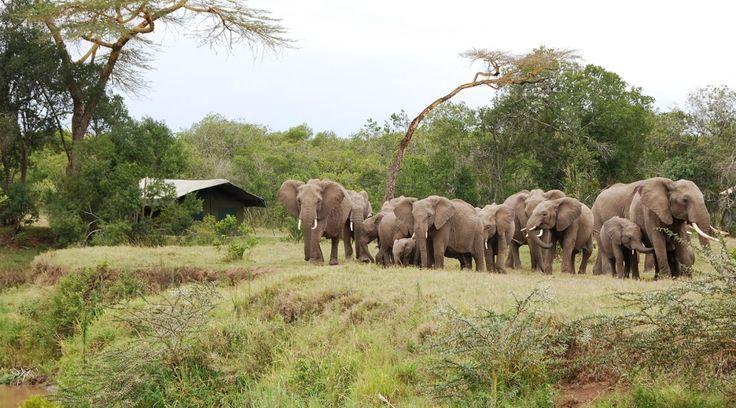 ©Ol Pejeta Bush Camp Ol Pejeta Bush Camp, Kenya