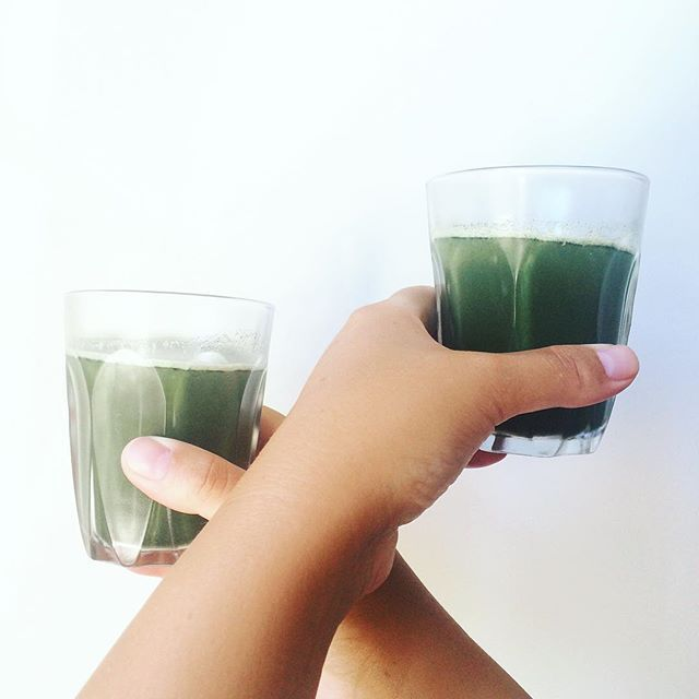Morning Shots for The Dudes - Barley Grass, Wheat Grass, Chlorella, Spirulina & Slowjuiced Pineapple #morningshots #raw #greenshots #chlorella #spirulina #wheatgrass #barleygrass #pineapple #morningroutine #vegan #paleo #cleaneating #healthychoices #green #slowjuicer #summer #rivieradudes #grønneshots #sundogrask #morgenshot