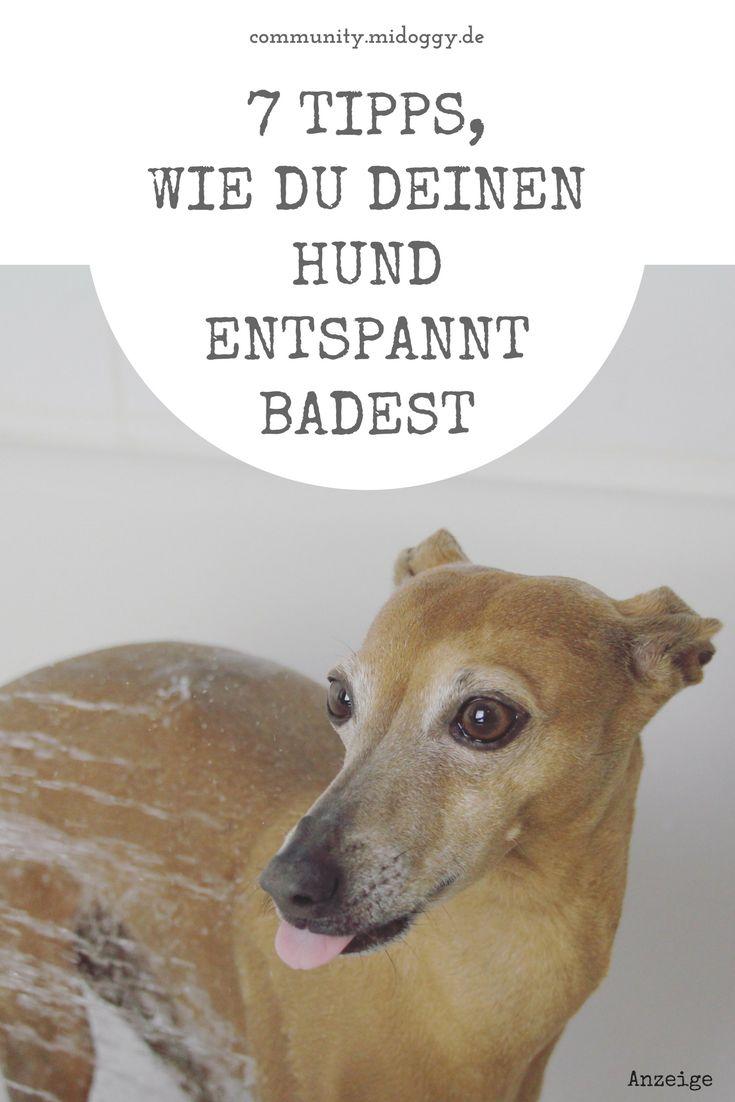 #Hund || #Baden || Pflege || Tipps || Hunde || Tricks || Shampoo || Bilder
