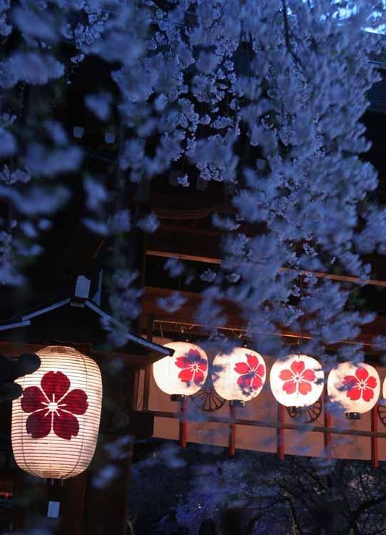 Hirano Shrine  #Kyoto#Japan  Photography Kinichi Maeda