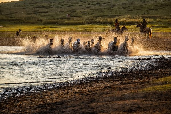 After the horses of the grasslands in Inner Mongolia have a frolic and good run, you can almost feel their joy and happiness! #China #Inner_Mongolia #Travel #Horses