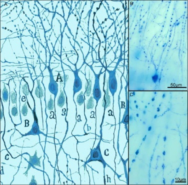 The 25 best methylene blue ideas on pinterest cell for Methylene blue fish