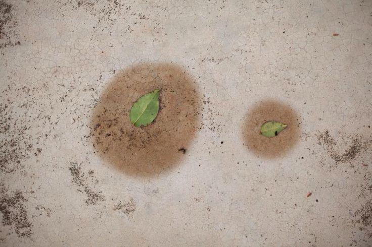 cao guimarães -- sem título da série/untitled from the series úmido (moist) 2014 -- fotografia/photograph -- 61 x 83 cm