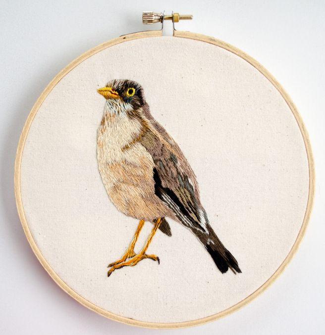 Zorzal (hand embroidery)