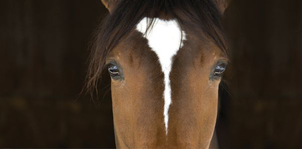 Choosing the right calming supplement for your horse