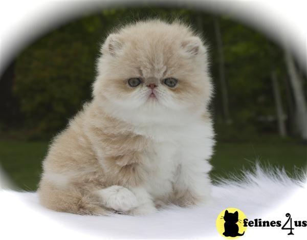 34 best munchkin images on Pinterest | Animal babies, Cute ...