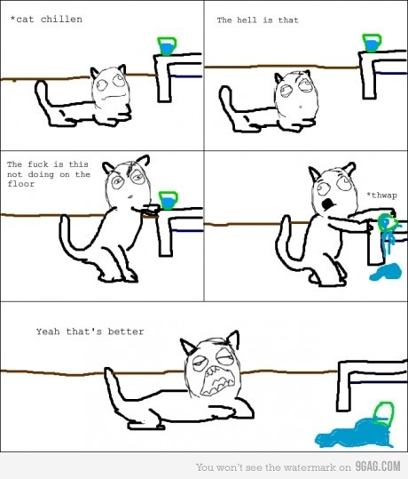 hahahahaha sooo true: Cats, Giggle, Funny Pictures, Cat Logic, Funny Stuff, Humor, Things, Animal