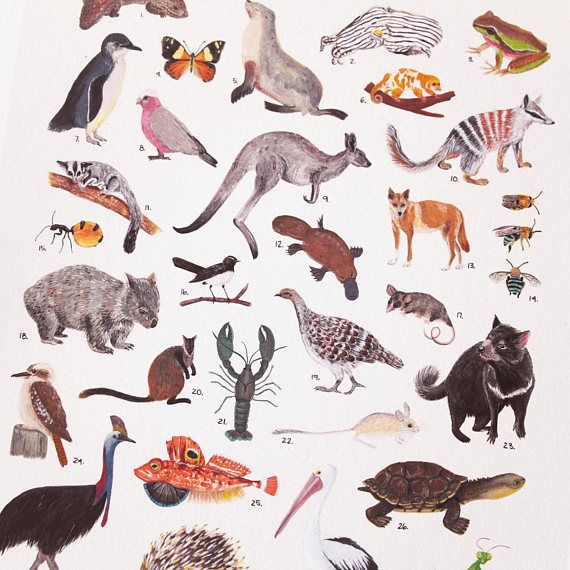 Your Place To Buy And Sell All Things Handmade Fauna Illustration Australian Animals Australian Fauna