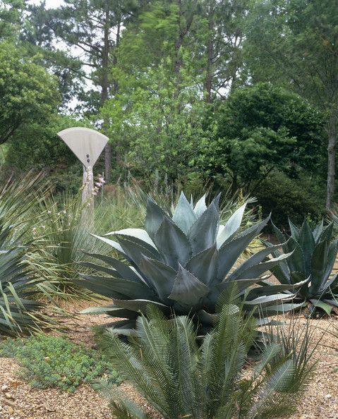 Details: Green Tropical Garden Keywords: Tropical Sculpture Garden Foliage