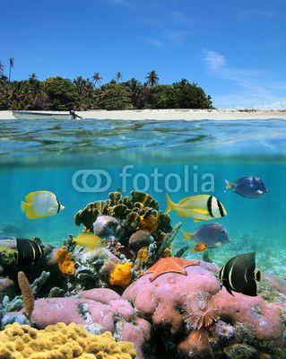 Beach och korallrev