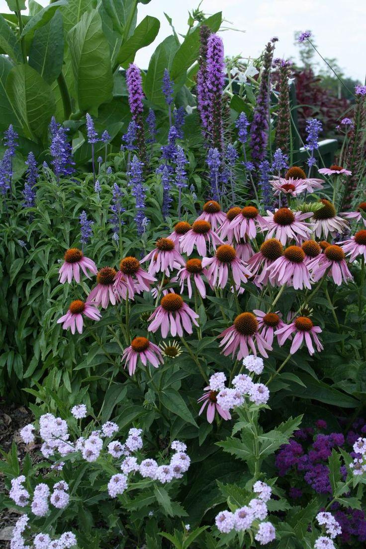 """Verbena """"Polaris"""", """"Artist"""" purple Ageratum, Echinacea, Liatrus, """"Victoria"""" Salvia and flowering Tobacco"""