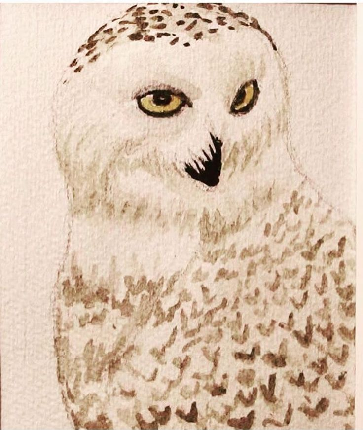 Snowy owl (2014) - watercolors
