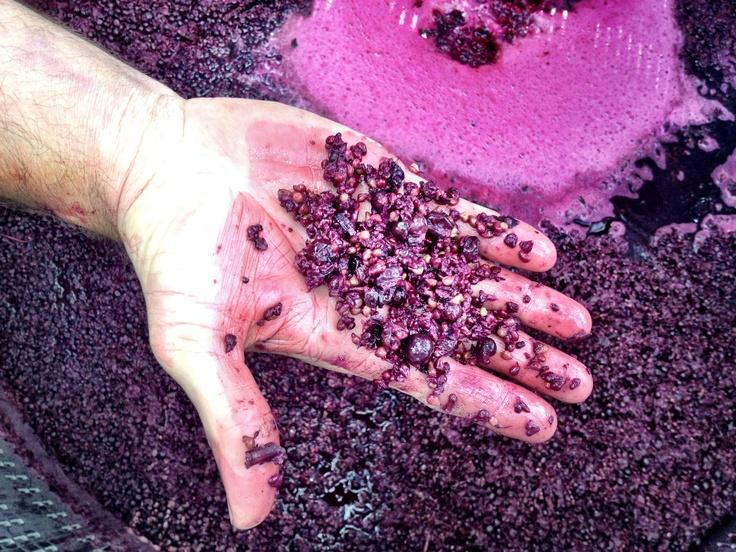 Grape skins after fermentation