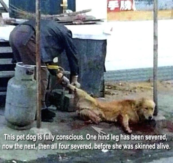 DOGS AND CATS ARE TOURTURED AND BUTCHERED IN THE MOST CRUEL AND HORRIFIC WAYS. Join the campaign and make a difference.