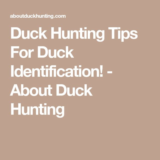 Duck Hunting Tips For Duck Identification! - About Duck Hunting #waterfowlhuntingtips