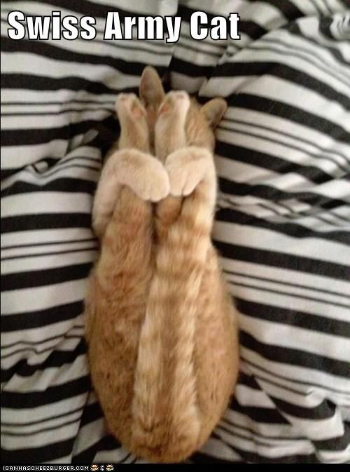 Swiss Army Cat -minimum assembly required