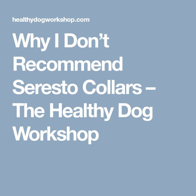 Why I Don't Recommend Seresto Collars – The Healthy Dog Workshop