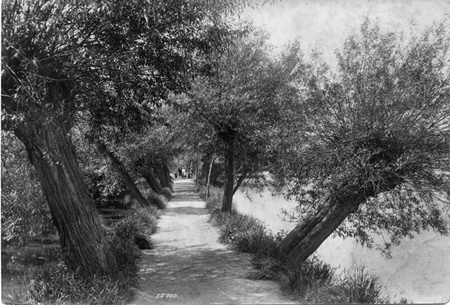 The Willow Walk 1906, Dorking