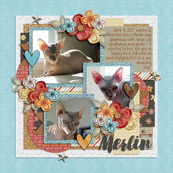 Merlin, our amazing Sphynx cat, who will have lived 16 months post-lymphoma diagnosis, despite only being given 1-3 months to live.  He's our amazing boy!  Template - Amazing year - June 1. - Tinci Designs http://store.gingerscraps.net/Amazing-year-June-1..html  Kit - Kitty Cat - Lindsay Jane