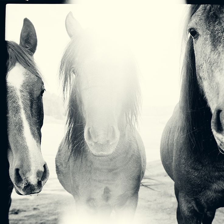 Horses of courses