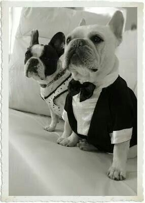 Best Man And Bridesmaid French Bulldogs At The Wedding So Cute