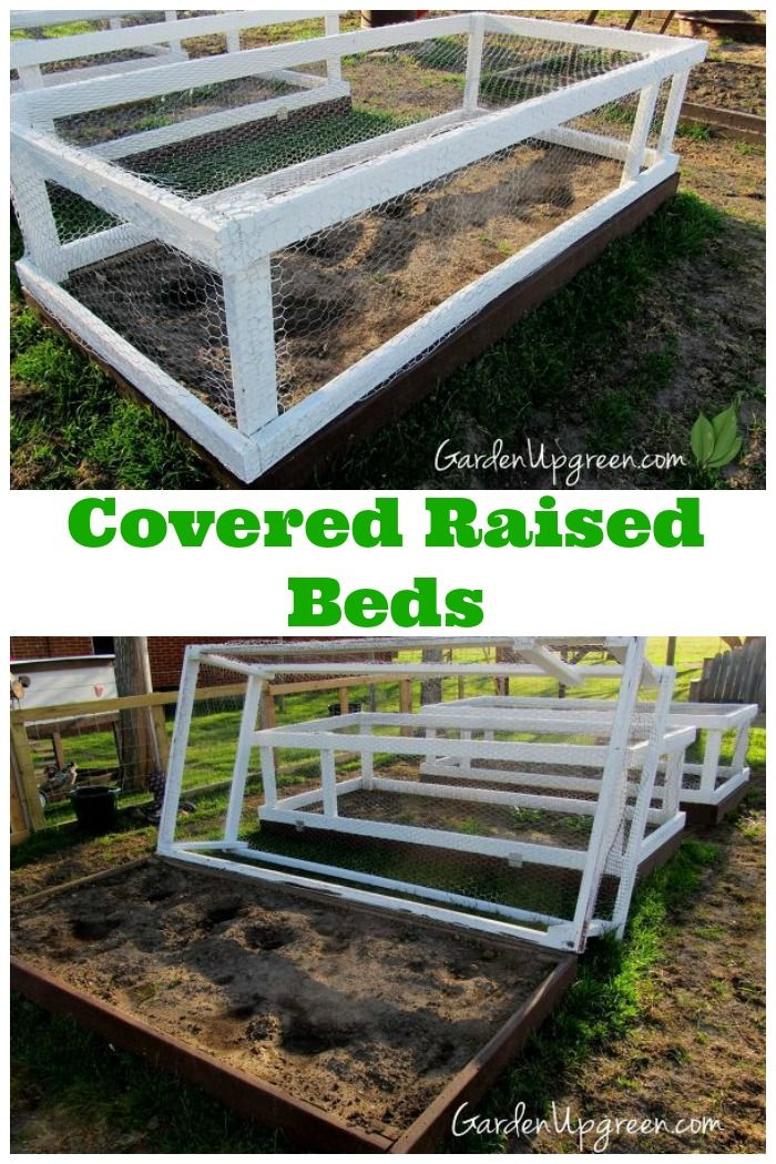 17 Best Images About Gardening Enclosure On Pinterest Gardens Raised Beds And Garden Pests