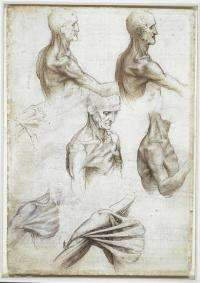 "Leonardo's anatomical sketches fascinate modern-day anatomist The superficial anatomy of the shoulder and neck from Leonardo da Vinci's Folio 2V, part of the artist's ""Anatomical Manuscript A."" This print is one of dozens included in 'Leonardo da Vinci: The Mechanics of Man,' an art catalog co-authored by Ron Philo, Ph.D., of the University of Texas Health Science Center at San Antonio and Martin Clayton, deputy curator of the Print Room at Windsor Castle, England. The catalog was produced…"