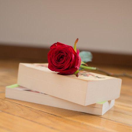 Rosa rossa singola